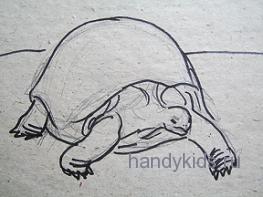 Как правильно рисовать черепаху
