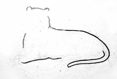 Поэтапный рисунок тигра
