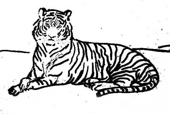 Реалистический рисунок тигра