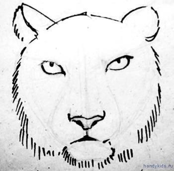 Контуры головы тигра