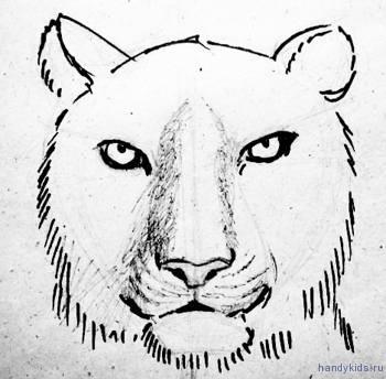 Рисуем морду тигра