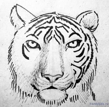 Распределяем полосы на морде тигра