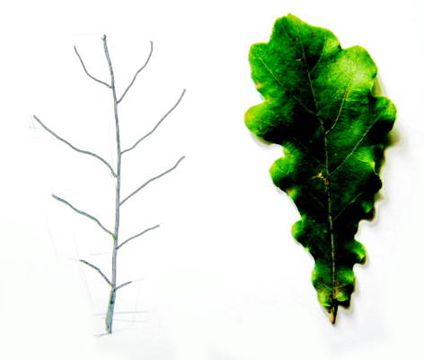 Рисуем лист дуба