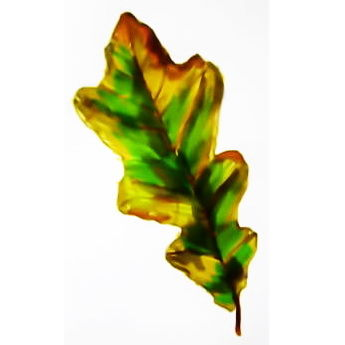 Рисунок Лист дуба