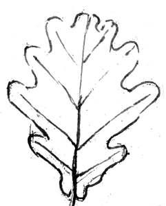 Раскраска -лист дуба