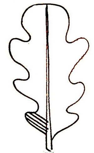 Штриховка Лист Дуба