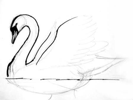 Рисуем плывущего лебедя