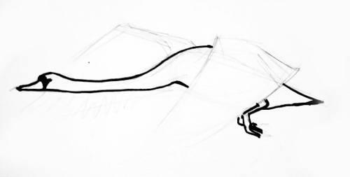 Рисуем летящего лебедя