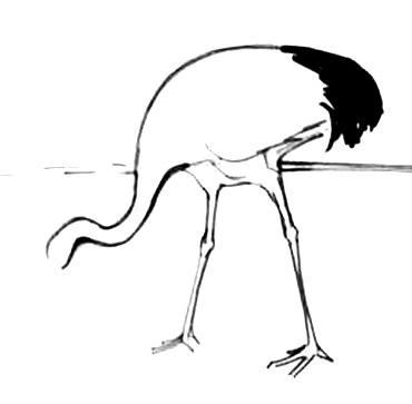 Поэтапный рисунок Журавль