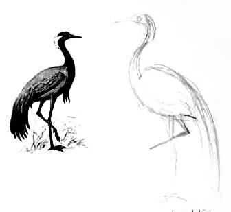 Этап рисования журавля