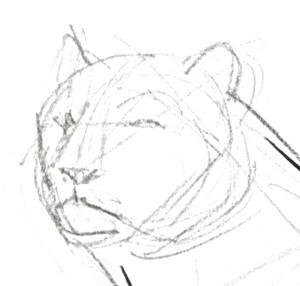 Как нарисовать голову тигра