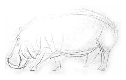 Бегемот-рисунок карандашом.