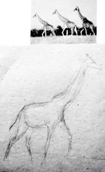 Рисунок жирафа карандашом