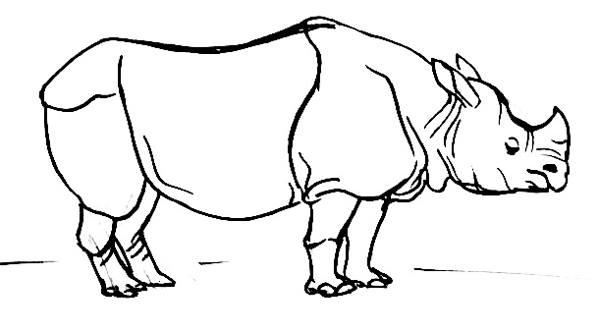 Индийский носорог рисунок