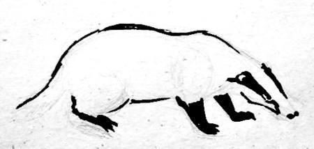 Поэтапное рисование барсука