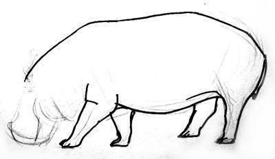 Нарисуем бегемота поэтапно