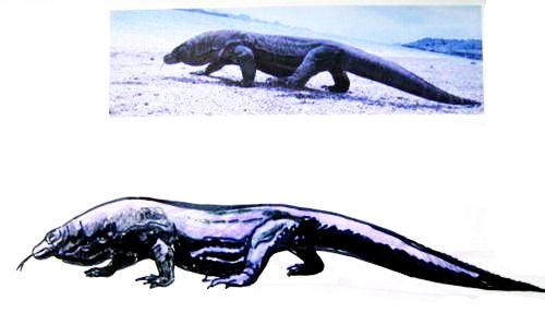 Как нарисовать комодского дракона