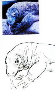 Комодский дракон