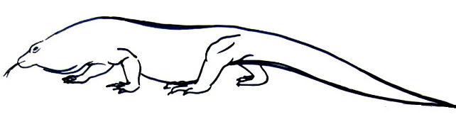 Комодский дракон рисунок