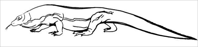 Раскраска Комодский Дракон