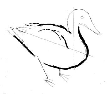 Как нарисовать стоящую утку