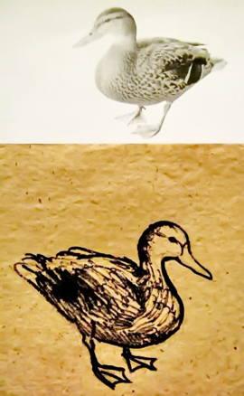 Рисунок  утка 24-33