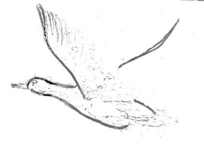 Рисуем утку поэтапно