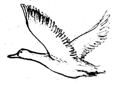 Рисунок летящая утка