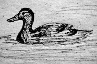 Утка плывёт рисунок.