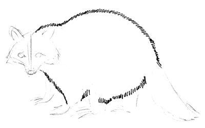 Рисуем туловище енота
