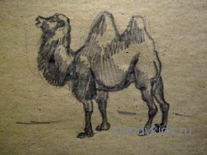 Рисунок-двугорбый верблюд