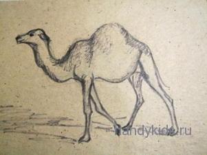 Как нарисовать одногорбого верблюда