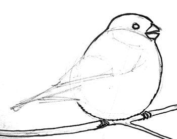 Как рисовать снегиря поэтапно