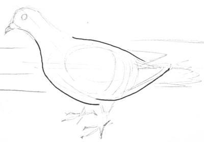 Рисуем голубя