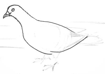 Рисуем голубя поэтапно