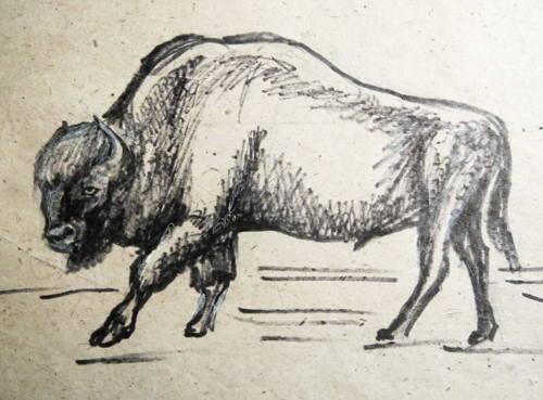 Зубр рисунок