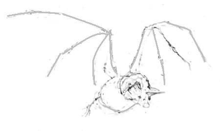 Эскиз летучей мыши