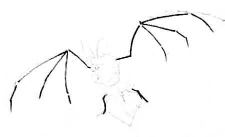 Рисуем летучую мышь