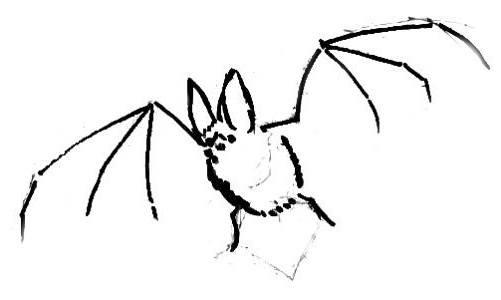 рисуем летучую мышь поэтапно