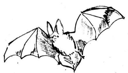 Летучая мышь рисунок -13