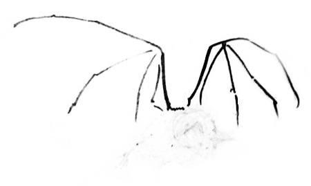 Рисуем летучую мышь-13