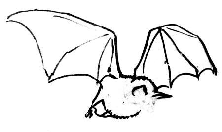 Урок рисования летучей мыши