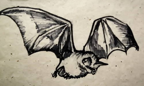 Летучая мышь рисунок 3