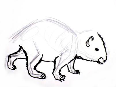 Дикобраз -поэтапный рисунок