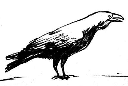 Рисунок Ворон 17