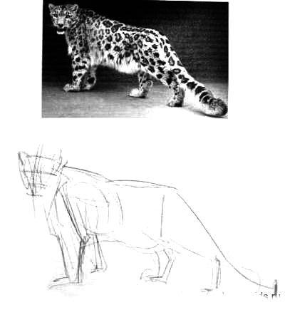 Как нарисовать барса