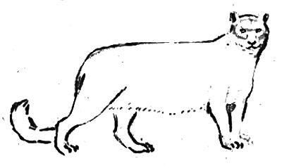 Ирбис рисунок