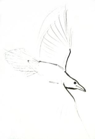 Как нарисовать голову ворона