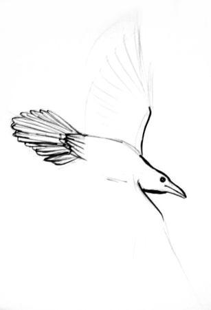 Нарисуем летящего ворона