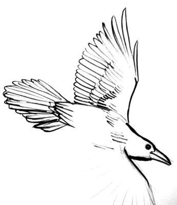 Нарисуем крыло ворона